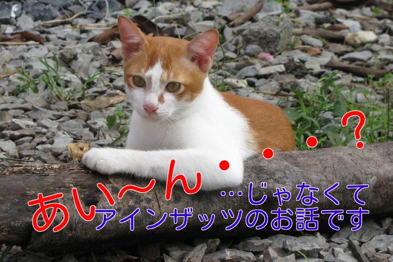 猫あいーん