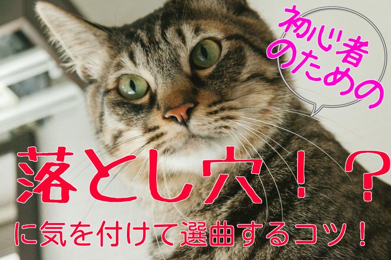 ネコのアップ