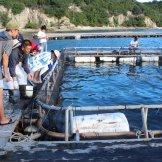 BMSサマーキャンプ2015-海上釣り堀